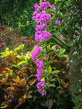 W Mixed Colors Kauai.jpg