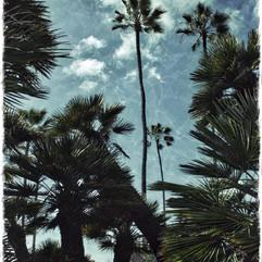 SRF Palms TEX.jpeg