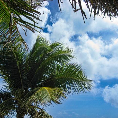 Clouds Palms 01 copy.jpeg