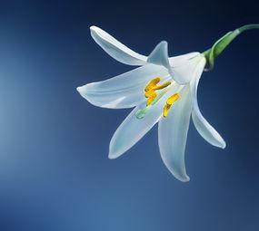 bloom-blooming-blossom-36770.jpg