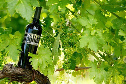 A wonderful bottle of wine under the green leaves of the vineyard that produces this amazing unique quality italian wine in umbria