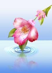 Flowers_Angelo Bonito.jpg