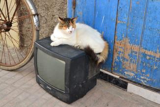 Télé Chat
