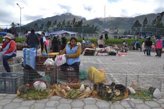 Vendeuse du marché aux animaux