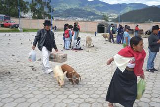 Femme tentant de ramener les 2 cochons qu'elle vient d'acheter