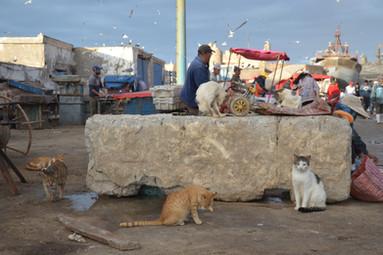 Chats Pêche # 2