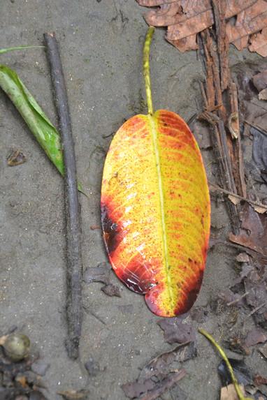 Feuille jaune