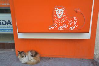 Chat vs Lion