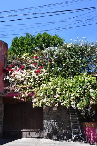 Mexique - CDMX - 290220 - Barrio San Ang