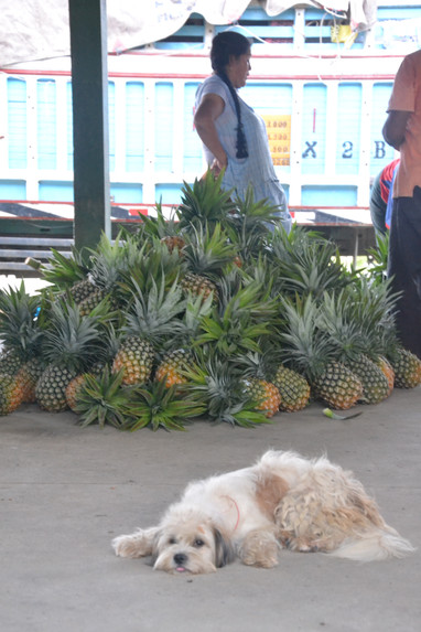 Chien - Ananas