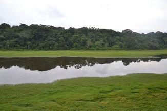 Mousse amazonienne