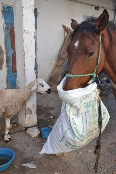 Cheval & Mouton