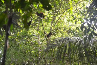 Singe dans un arbre