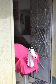 Mannequin Cheval