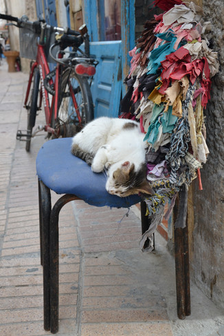Chat - Chaise