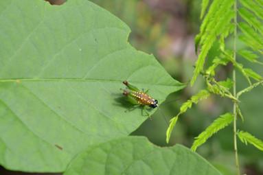 Joli insecte multicolore