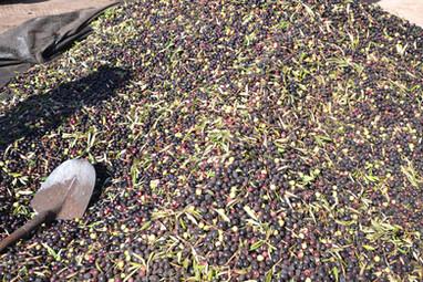 Montagne d'olives