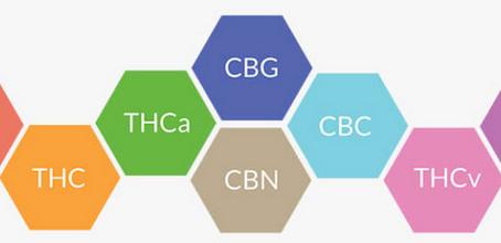 CBC, CBG, CBN, CBDA, The Other Cannabinoids Found In Full Spectrum CBD Products