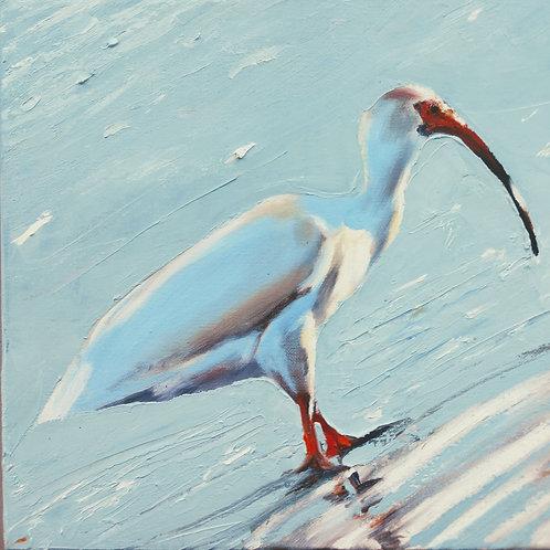 Ibis on Canvas