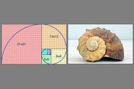 The Golden Curve and the Fibonacci Sequence