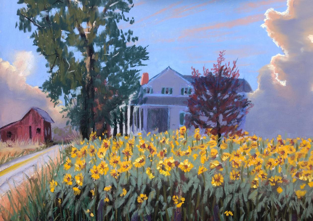 Sycamore Sunflowers.jpg