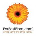 FEF, Far East Flora, vk transformation, digital marketing, strategic consulting, 360 marketing