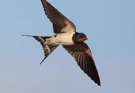 repelente-para-andorinhas-2.png