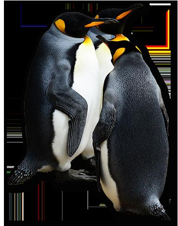 penguin-1085417_1920 copy 3.png