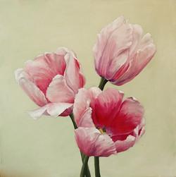 Pink Darwin Tulips