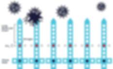 ZOONO_Molecule-diagram.jpg