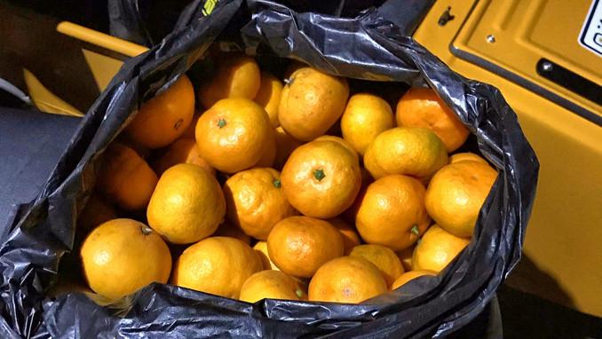 Abkhasian tangerin
