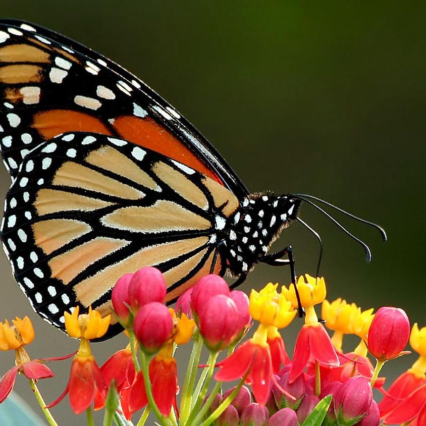How to Raise a Monarch Workshop