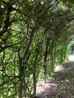 Walk Under the Arbor
