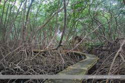 Petit Trou Mangrove