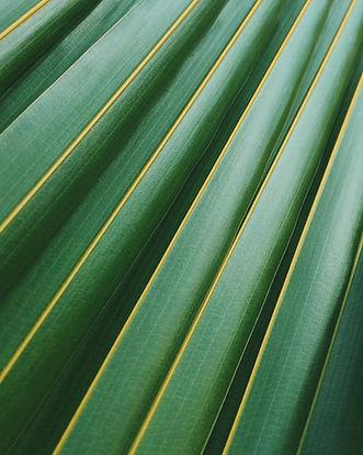 Feuille de palmier