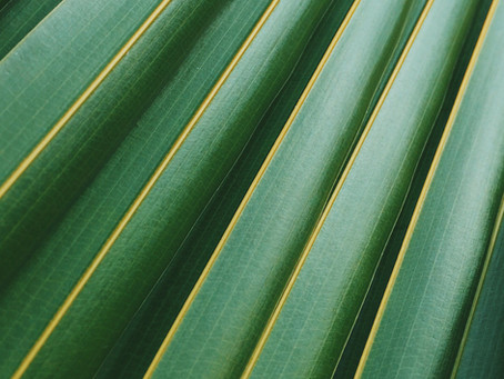 1 Minute Soul Break Ep1: Palm Sunday