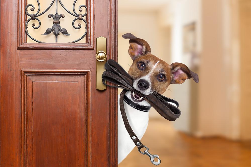 Pets | Pet Walking| Pet Care | Errands