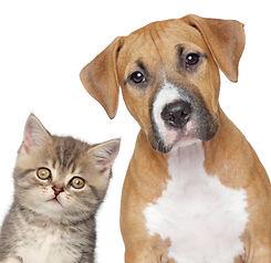 pet care services charleston