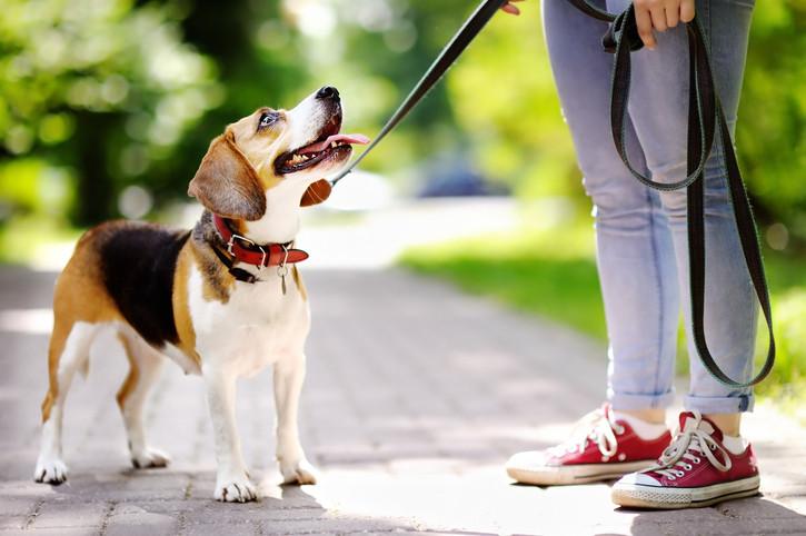 beagle-woman.jpg