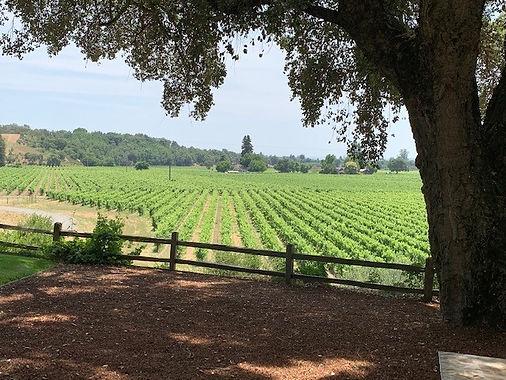 vineyard wedding sonoma.jpg