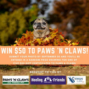 Take Cute Pictures of Your Pet & Win a Prize!