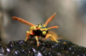 gentle insect vacuum