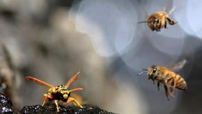 Shungite, Bees & 5G