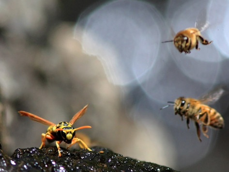 Madder Than a Wasp on Fire? Find Your Honeypot of Peace