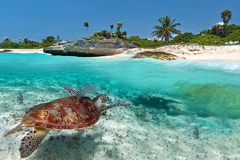 Mexico-Green-Turtle.jpg