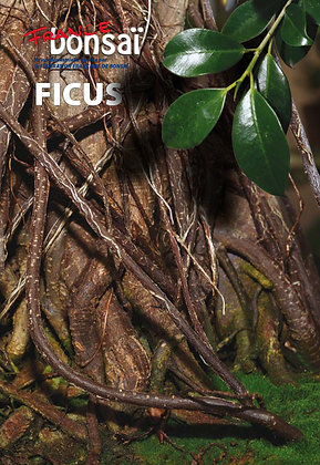 France Bonsaï : Ficus