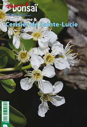 France Bonsaï : Le Prunus