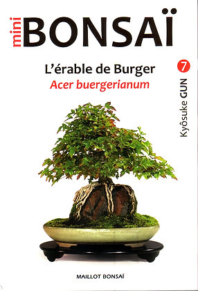 MINI BONSAI : L'Erable de Burger