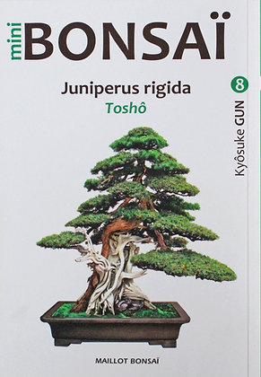 "MINI BONSAI : Juniperus rigida ""Toshô"""