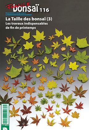 France Bonsaï Nº 116